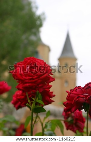 Roses at the Alcazar - stock photo