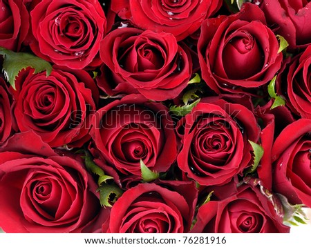 roses background of my floral backgrounds series - stock photo