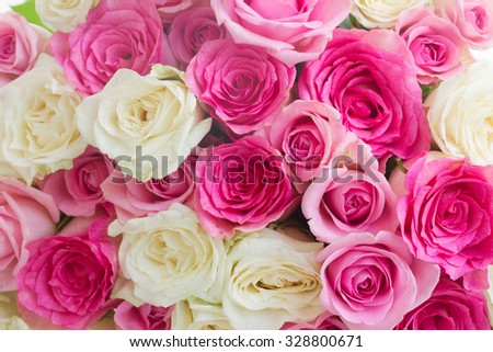 roses background  -  pink and white fresh rose flowers close up - stock photo
