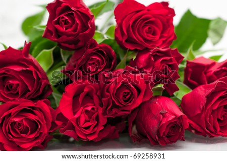 Roses Bunch - stock photo