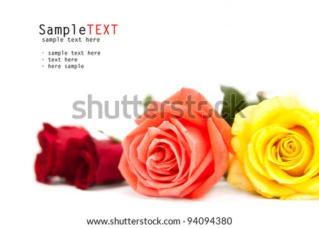 Roses flower on white, valentine day concept