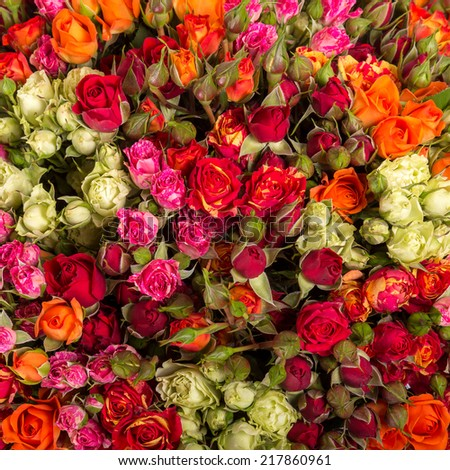 Roses flowers and petals background. - stock photo