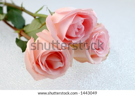 Roses for a true love - stock photo