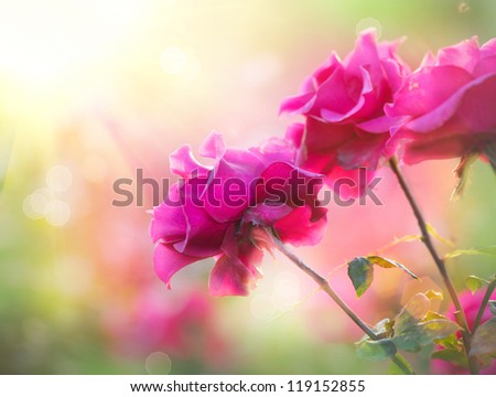 Roses. Growing Flowers - stock photo