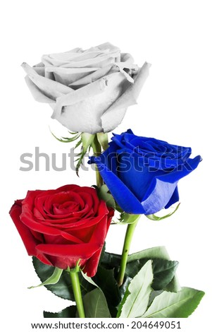 Roses in colors of russian flag isolated over white - stock photo