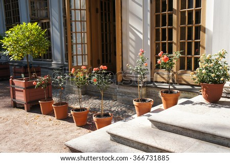Roses in the pot in line with big windows and stairs - stock photo