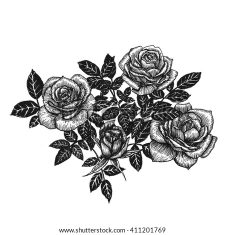 Flowers Set Hand Drawn Rose Vector Stock Vector 436070629