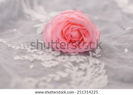 roses lying on silk - stock photo