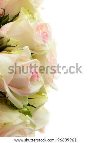 Roses on a white background - stock photo