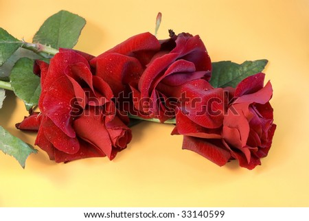 Roses on a yellow background - stock photo