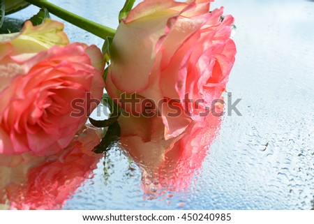 Roses on sky background