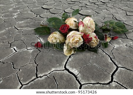 Roses on the dried up earth - stock photo