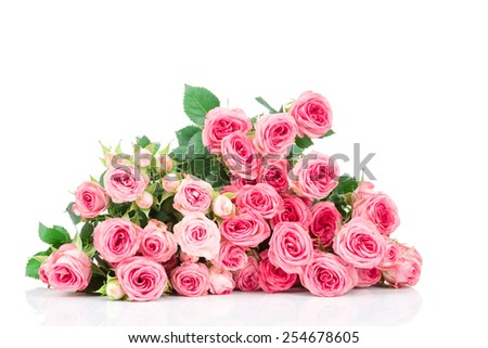 Roses on white background - stock photo