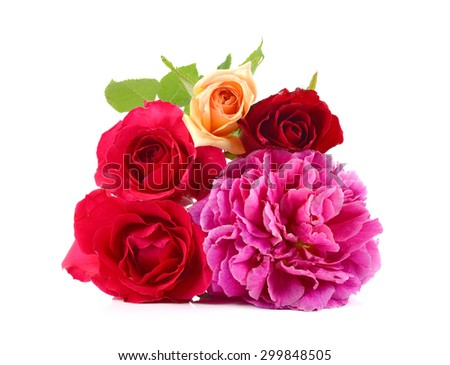 roses on white, floral background, greeting card, wallpaper - stock photo