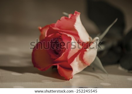Roses, petals and heart shaped confeti, some effects used to remove certain colours from image and median noise reduction also used on some images to produce a faded look, - stock photo