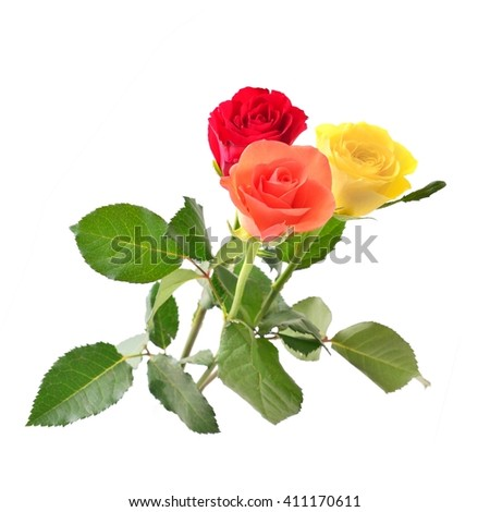 Roses. Rose. Roses for love. Roses isolated on white. Rose, rose, roses, roses. Roses on white background. Beautiful color roses. Roses gift. Roses on white, Bouquet of roses. Roses for mothers day.  - stock photo