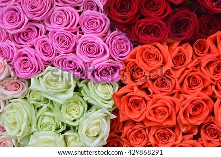 Roses. Roses background. Fresh roses. Roses for love.  Roses card. Pink roses.  Red roses.  Orange roses.  White roses. - stock photo