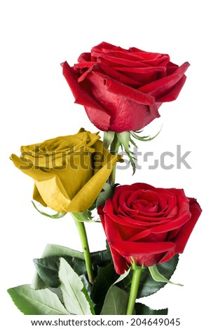 Roses Spanish flag colors isolated over white - stock photo