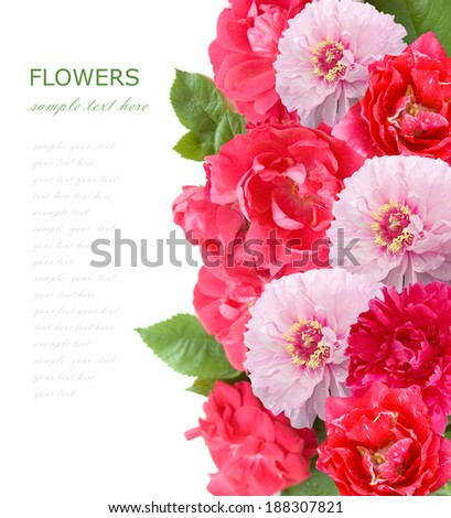 Roses,tulips and peony background isolated on white with sample text