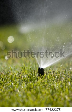 Rotating sprinkler head dispersing water on grass