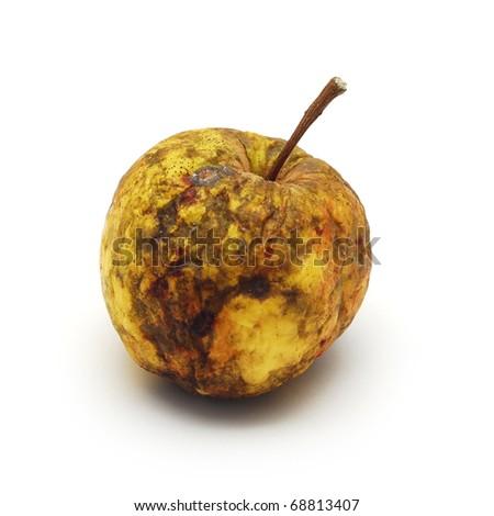 rotten apple - stock photo