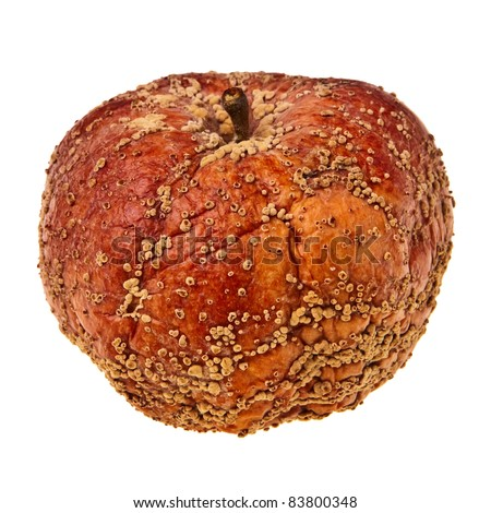 Rotten apple isolated over white background. - stock photo