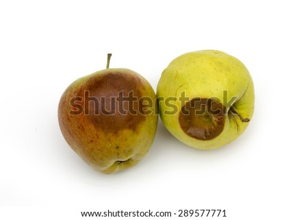 rotten apple on the white background - stock photo
