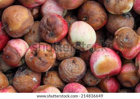 Rotten apples.  - stock photo