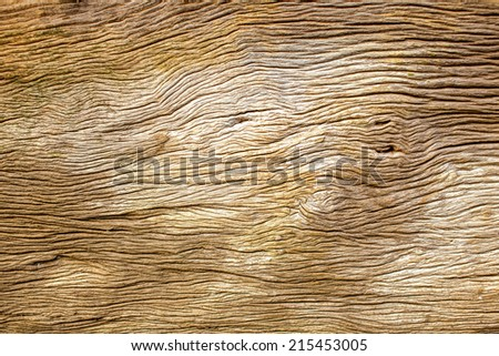 Rotten driftwood - stock photo