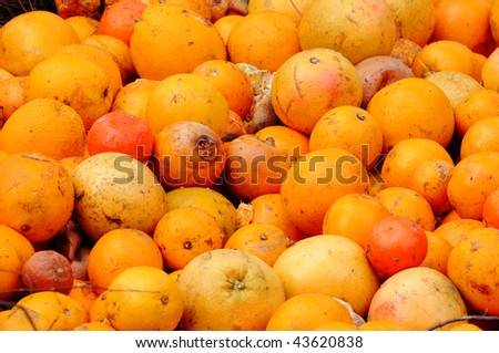Rotten fruit and vegetables including tomatoes, oranges, and grapefruit. - stock photo