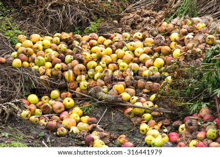 Rotten green and yellow apples with other waste on a compost heap on an allotment site - stock photo