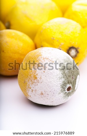 Rotten lemon in front of some fresh ones - stock photo