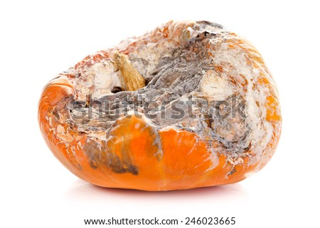 Rotten pumpkin isolated on white background - stock photo