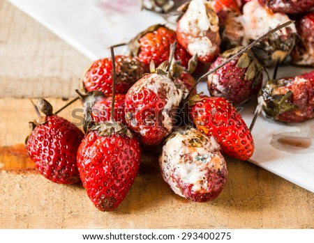 Rotten strawberries - stock photo