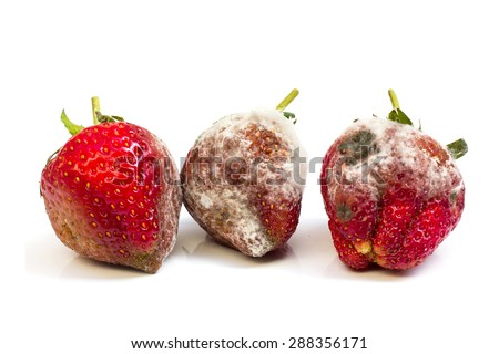 Rotten strawberries isolated on white background - stock photo