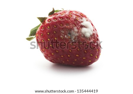 rotten strawberry with mildew isolated on white - stock photo