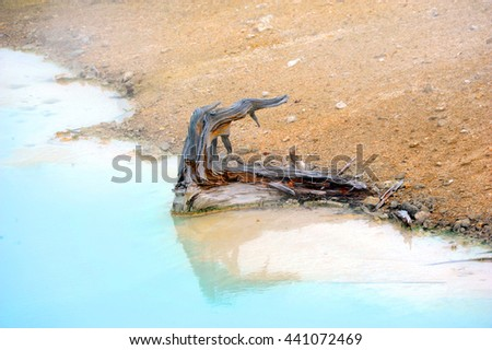 Rotten stump of a tree resides in Palette Springs in Norris Geyser Basin in Yellowstone National Park.  Aqua water surrounds it. - stock photo
