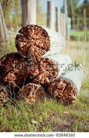 rotten wood - stock photo