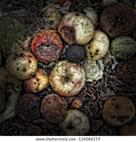 Rotting apples on a Compost Heap. Artistically alienated to create a grungy somber atmosphere - stock photo