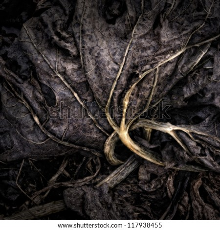 Rotting Pieplant Leaves on a Compost Heap/Artistically alienated to create a grungy somber atmosphere - stock photo