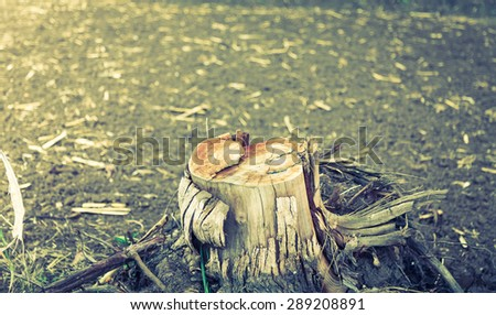 Rotting tree trunk ( Filtered image processed vintage effect. ) - stock photo