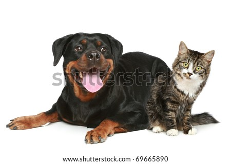Rottweiler and cat lies on a white background - stock photo