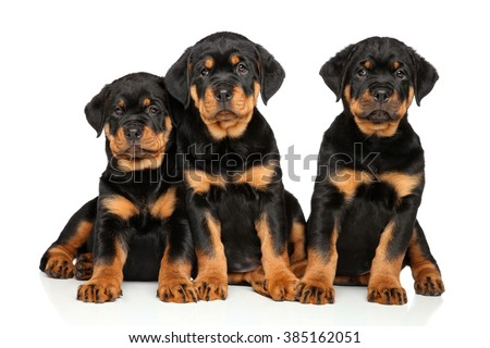Rottweiler puppies on white background - stock photo