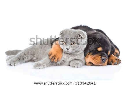 Rottweiler puppy embracing cute kitten. Isolated on white background - stock photo