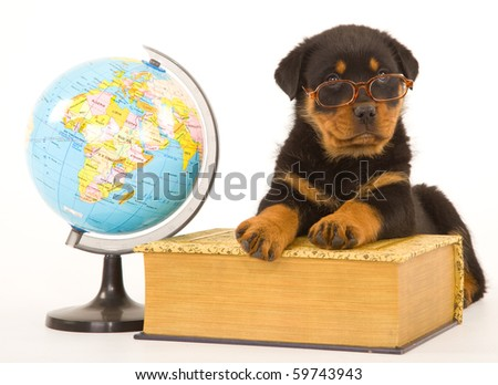 Rottweiler puppy wearing glasses on book with world globe, on white background - stock photo
