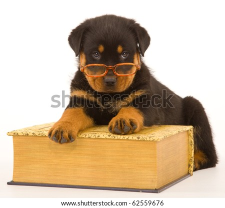 Rottweiler puppy wearing glasses with huge book - stock photo