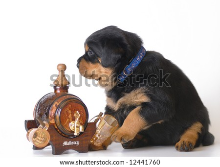 Rottweiler puppy with wine - stock photo