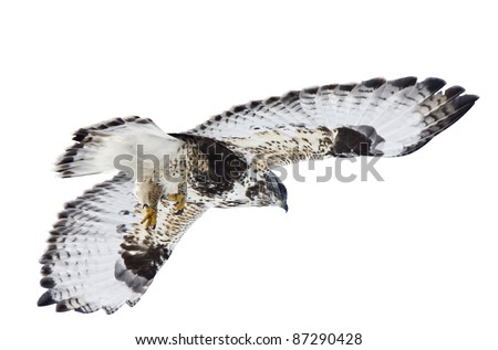 Rough Legged Hawk Saskatchewan Canada against sky - stock photo