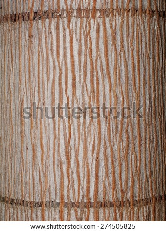 rough light brown surface texture of a palm tree under natural sunlight - stock photo
