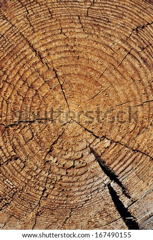 Rough obsolete wooden cut texture with tree rings and cracks